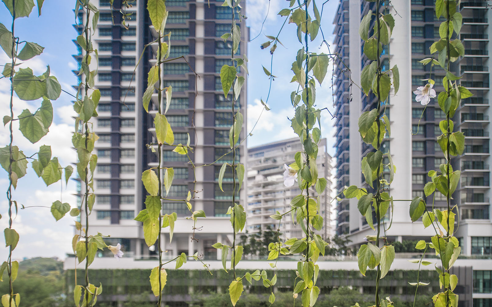 demo for ecological architects verticle planter