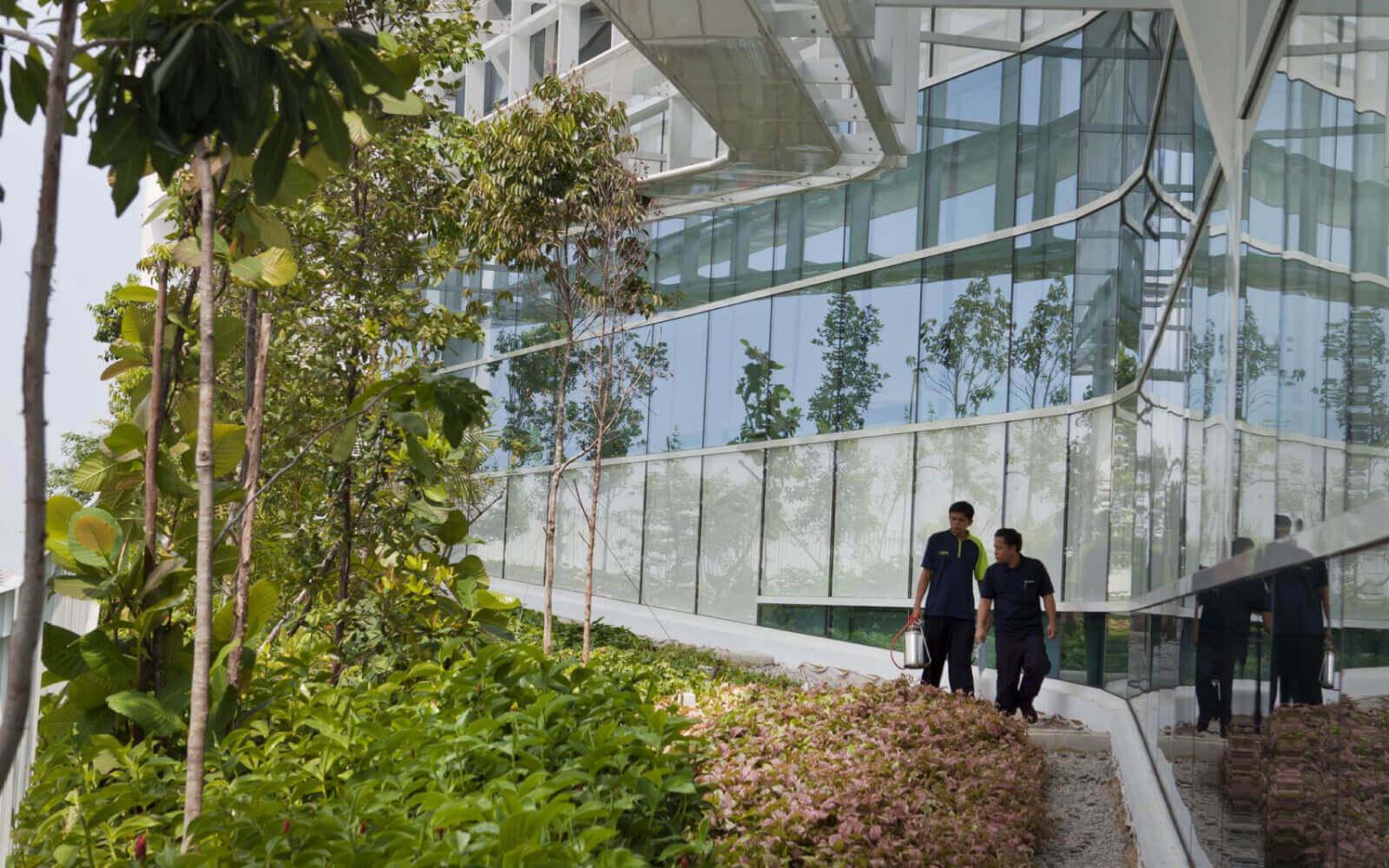 green architect roof design for solaris
